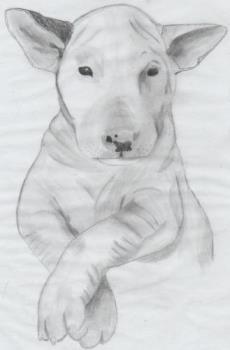 Bull Terrier - My art work!