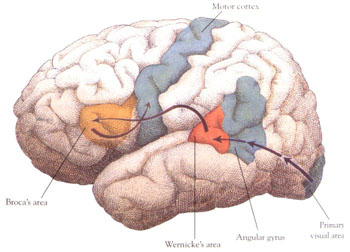 Brain - The organ which mental patients are attacked.