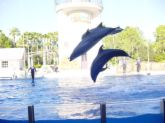 sea world - i loved watching the dolphins at sea world! this on e is much better than the one in texas!