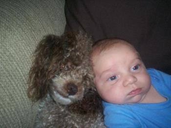 My poodle& Baby - My Poodle & baby