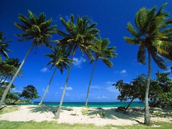 Bacardi Beach, Cayo Levantado, Dominican Republic - Bacardi Beach, Cayo Levantado, Dominican Republic