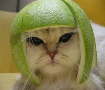 funny cat - photo of a funny cat looking too cute!