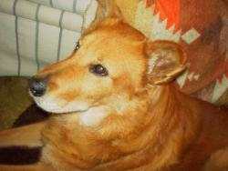Rusty - Our best buddy Rusty. He is a Shiba Inu from Japan.