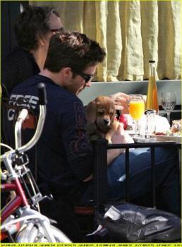 jake gyllenhaal with his puggle - thats so sweet