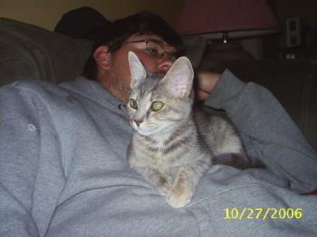 my cat - this is my 6m old kitten.. she was about 4.5 months old when this picture was taken