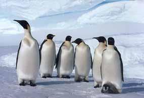 penguins!!! - penguins!!!