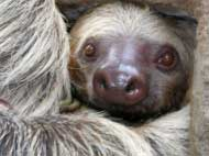 This is me slothing! - Picture of a sloth
