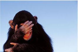 sooooooo embarrassing - embarrassed monkey