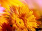 flowers - a welcom flower