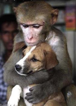 2 sweet animals - a monkey and a dog!!!they share their feelings!!!!!!!!