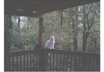 My Kitt - my wonderful cat