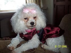 mimi  - my dog