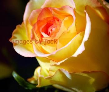 flower - flower