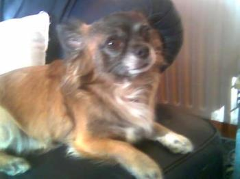 My little Dog - This is my little Man he is a lovely and funny little Fellow