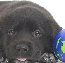puppy - puppy