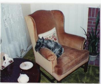 Schnauzer - This my adorable black schnauzer named Ebony.  She died about 6 years ago.  She is so cute, playful and wonderful.  I miss her so much.
