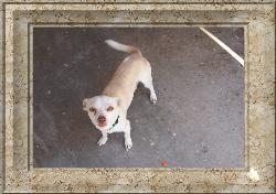 rocko  - My dog