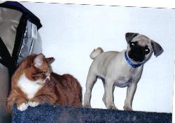 My Cutties! - My pug and my fat cat.