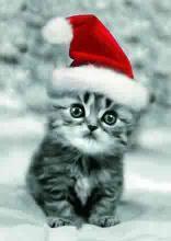 Merry Christmas - cat Christmas