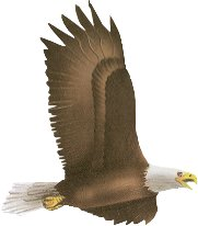 Eagle - The most Beautiful Bird out there.