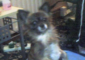 Gissi begging  - This is my little Fellow asking nicely lol