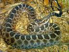 Wonderful snake - snake is a animla which lives in jungle and which contains posions also.  snake bites people will die immediately