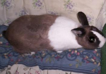 Our Bunny - Here is a picture of Mr. Bobbers, our bunny