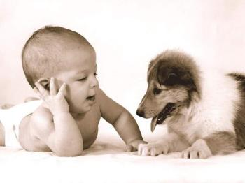 doggy - look here is one