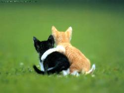 Best friends! - What say buddy!!?