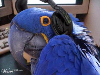 Telemarketter - Blue Telemarkettig parrot, real cute concept