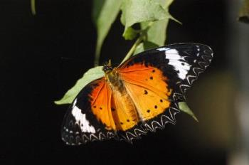 butterfly at my garden - monarc butterfly