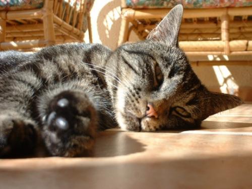 cats,cat,beautiful,pet - cats,cat,beautiful,pet