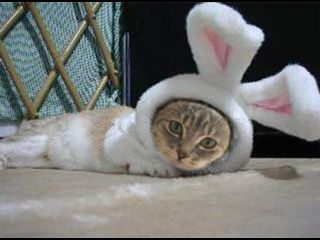 cutieypie! - Great Easter costume.