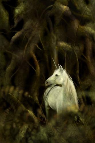 sweet - unicorn