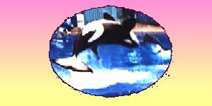 whale - whale