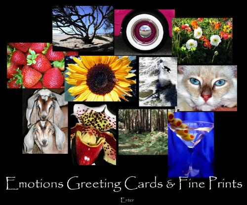 Greeting Cards - Greeting Cards