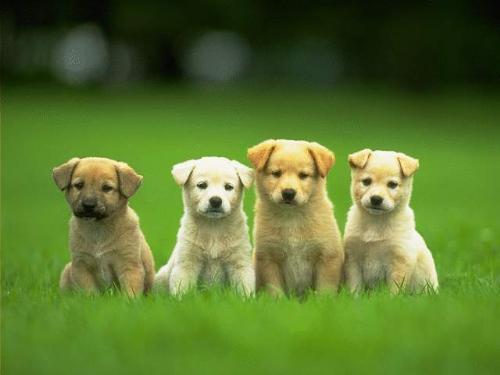 Man's Best friend - four cute pups