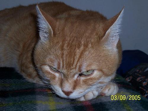 My cat - Cat