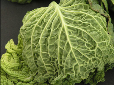 Savoy cabbage - Just incase you are not sure which one it is, it's the one pictured above, all wrinkly and crinkly!!!