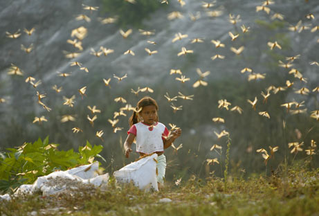 thousands fly at my stomach - pix of a child