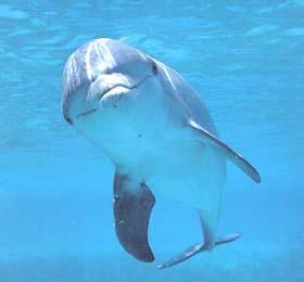 Dolphin   - dollleee