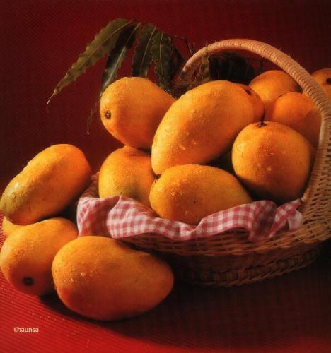 mango - i love mango's a lot