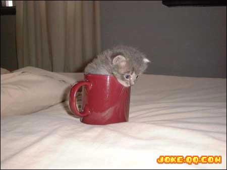 cat - home