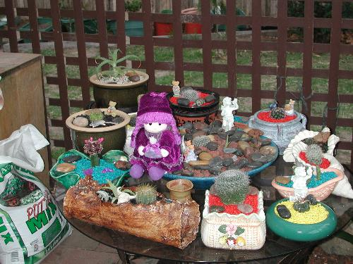 Penelope Cactus garden - Penelope visits a friends cactus garden...