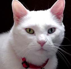 nice cat - sweety cat
