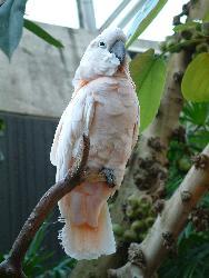 Talk to the birdie