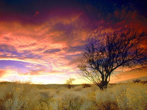 Almond Tree, Antelope Valley, California - 1600x - Destination - Almond Tree, Antelope Valley, California - 1600x............ Best locations from around the world ... Truly an adventurer's paradise...High Resolution Photography
