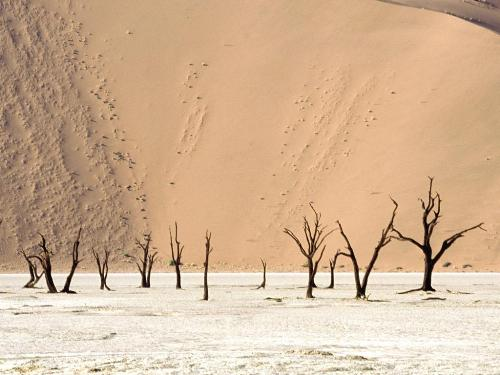 Dead Ulei, Namib Desert, Namibia, Africa - 1600x - Destination - Dead Ulei, Namib Desert, Namibia, Africa - 1600x............ Best locations from around the world ... Truly an adventurer's paradise...High Resolution Photography