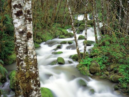 Delta Creek and Alders, Siskiyou National Forest - Destination - Delta Creek and Alders, Siskiyou National Forest............ Best locations from around the world ... Truly an adventurer's paradise...High Resolution Photography