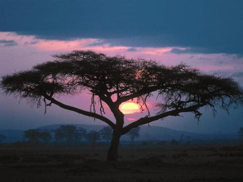 East African Sunset - 1600x1200 - ID 24704 - Destination - East African Sunset - 1600x1200 - ID 24704............ Best locations from around the world ... Truly an adventurer's paradise...High Resolution Photography